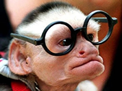 monkeyglasses1.JPG