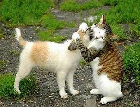 cat-loves-dog
