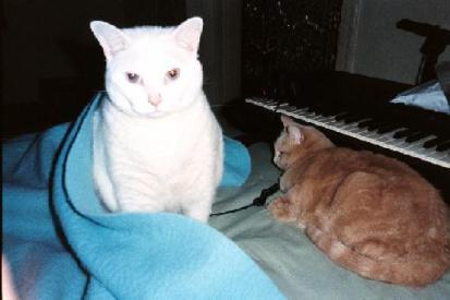 catzapoppin-010.jpg