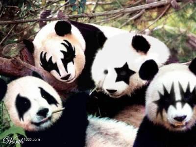 panda-kiss_qjgenth.jpg