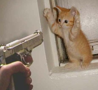 kitten-and-gun